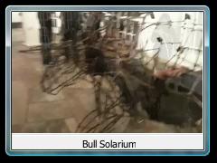 Bull Solarium